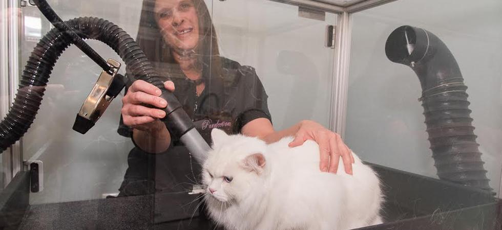 Grooming2